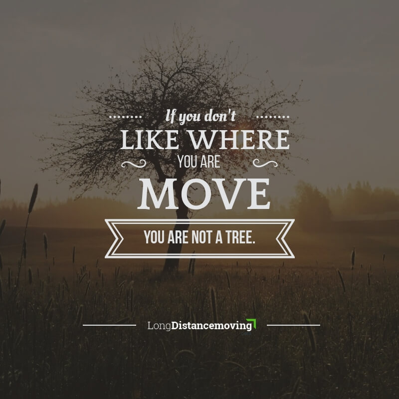 If you don't like where you are - move. You are not a tree.